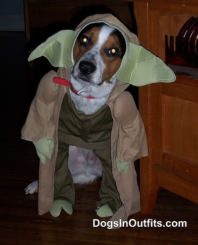 Advertisements & My Puppyu0027s Favorite Halloween Costumes | Lavender Parking